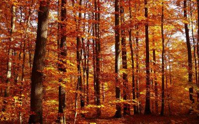 秋季:信義會秋季保健養生食療