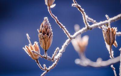 冬季:護士協會冬季養生